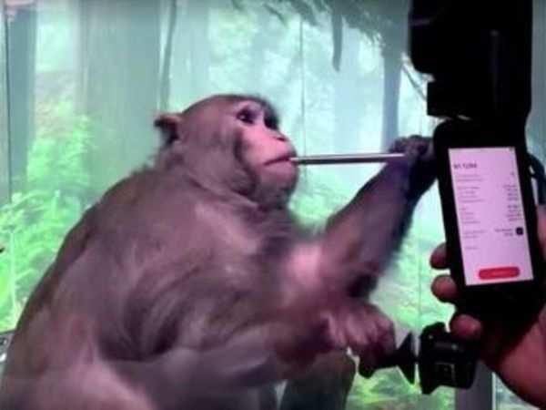رونمایی ایلان ماسک از تکنولوژی درمان قطع نخاع